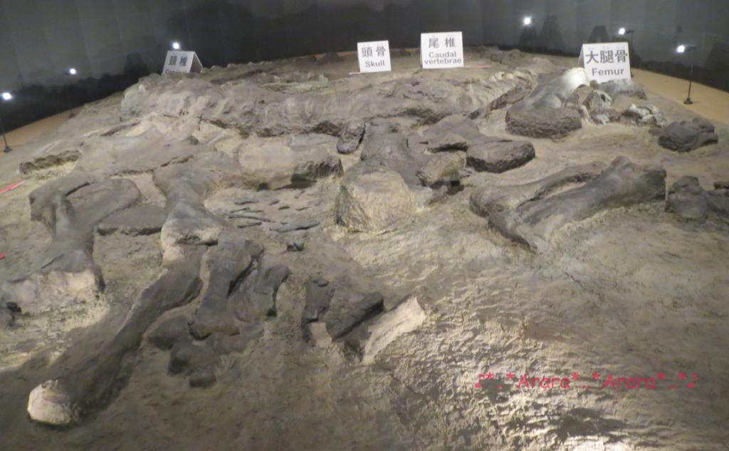 カマラサウルスの産状化石画像