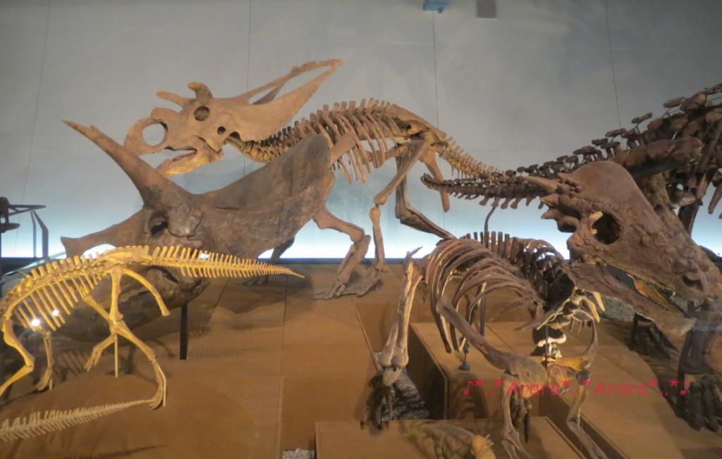 恐竜博物館の恐竜全身骨格画像