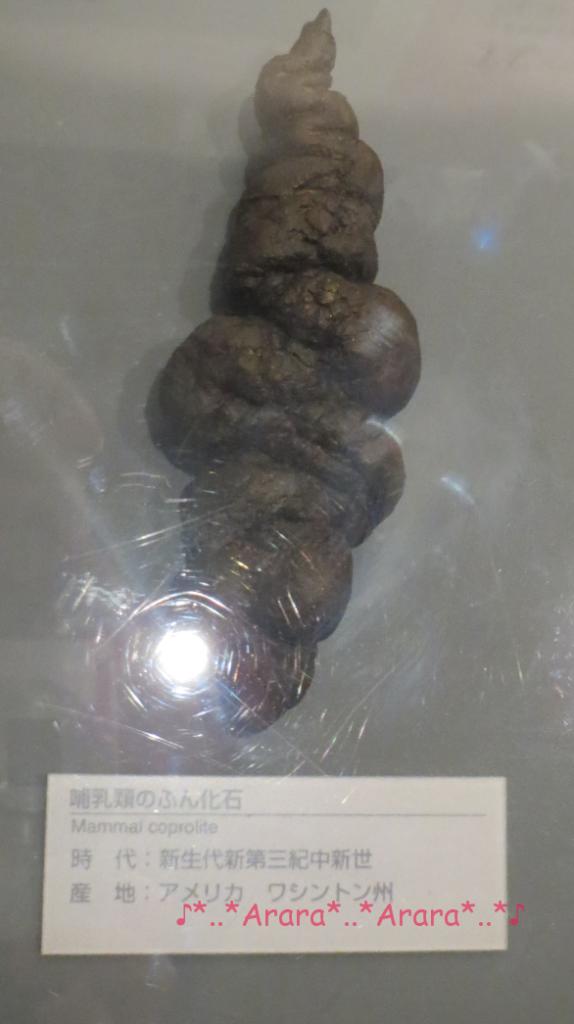 恐竜博物館のウンチの化石画像