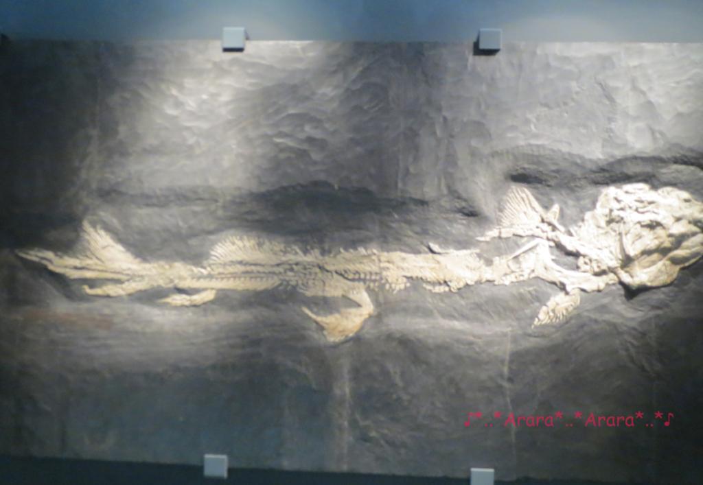 芸術品のごとく展示されている化石標本画像
