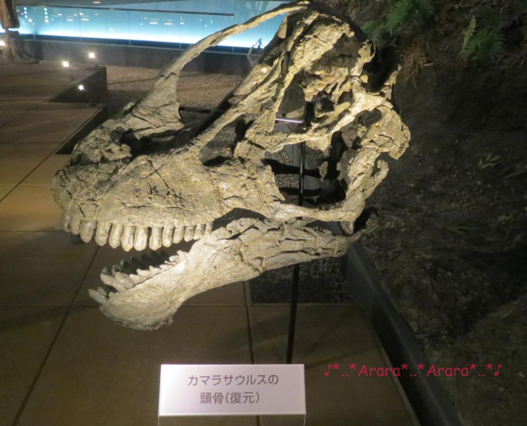 カマラサウルスの復元骨格画像