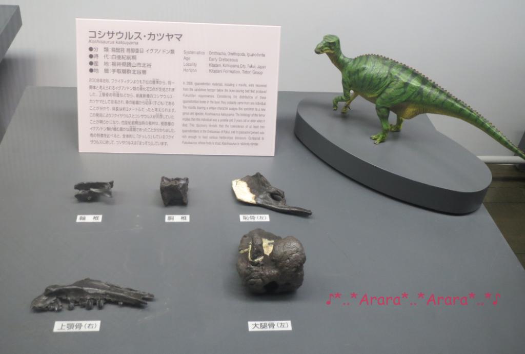 勝山市で見つかった恐竜の化石画像