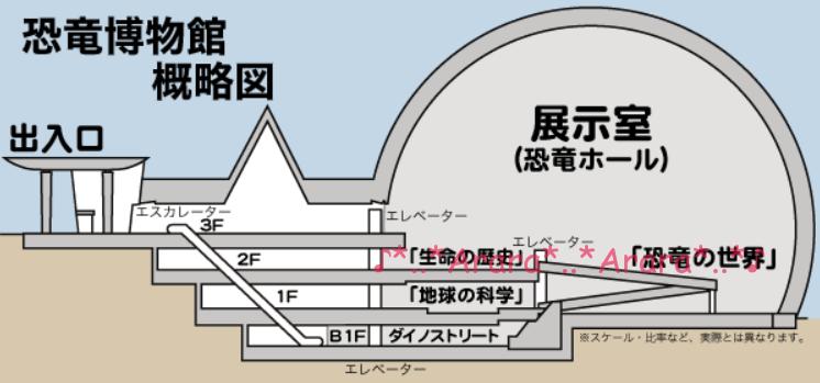 立恐竜博物館 建物断面図