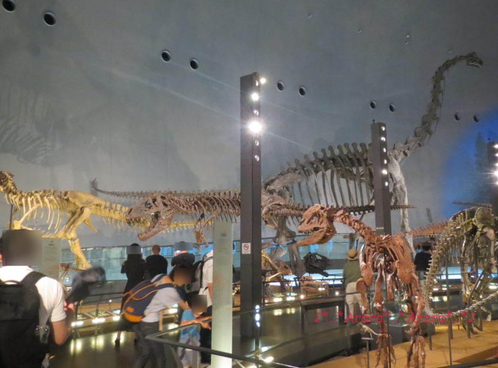 福井県立恐竜博物館 恐竜の全身骨格画像