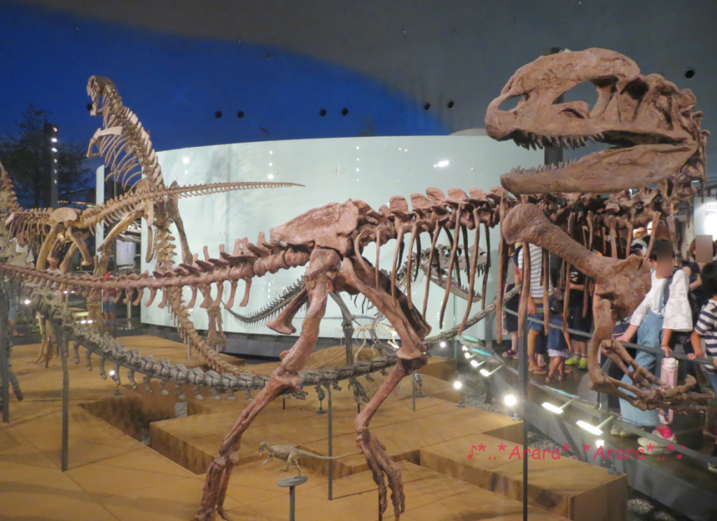 福井県立恐竜博物館の恐竜の全身骨格画像