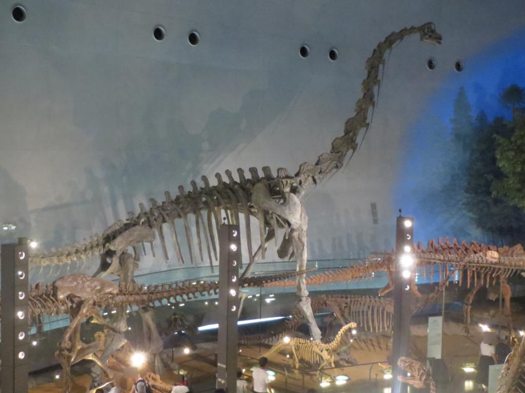 恐竜博物館2階から恐竜の骨格を見る