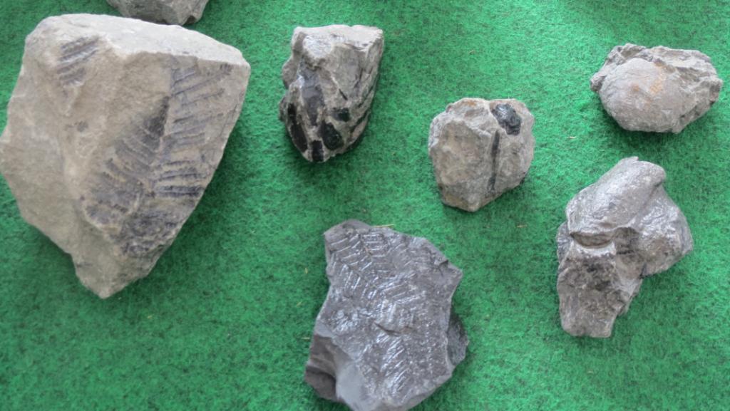 化石発掘体験で見つかる化石