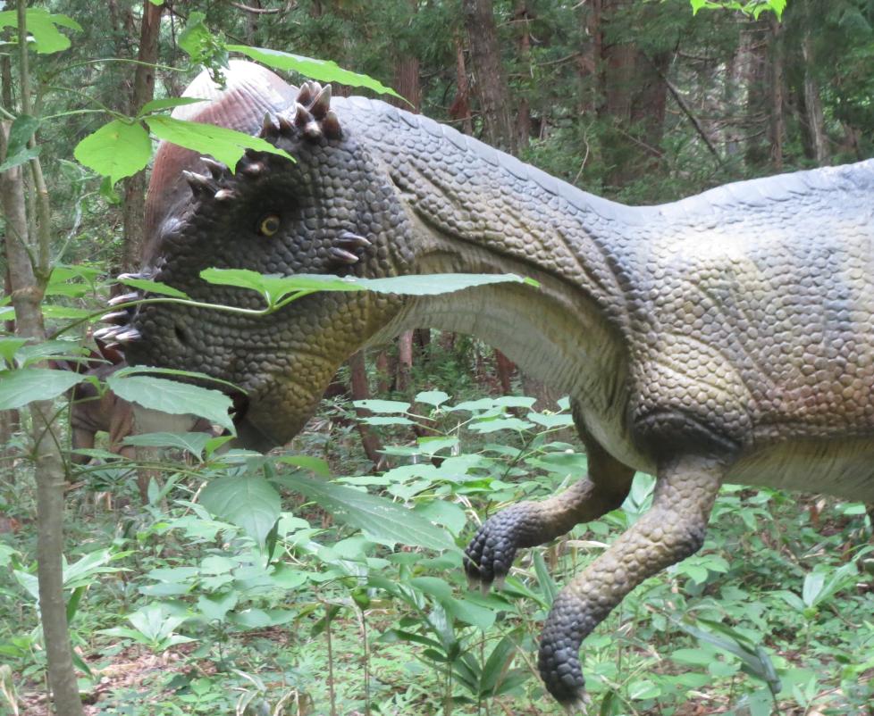 勝山ディノパーク「パキケファロサウルス」画像